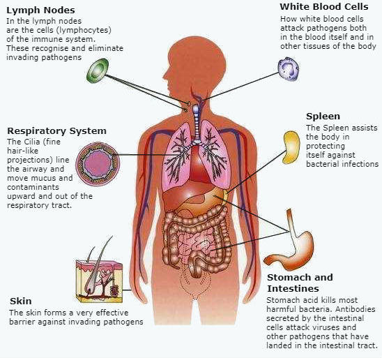 How-To-Exercise-And-Boost-The-Immune-System-Facts-About-The-Immune-System-overview-illustration