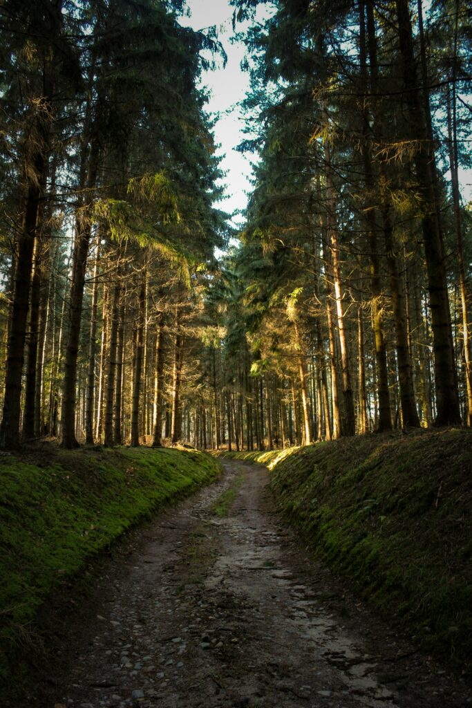 How-To-Experience-Wonderful-Flow-In-Running-Training-Path-In-The-Wood