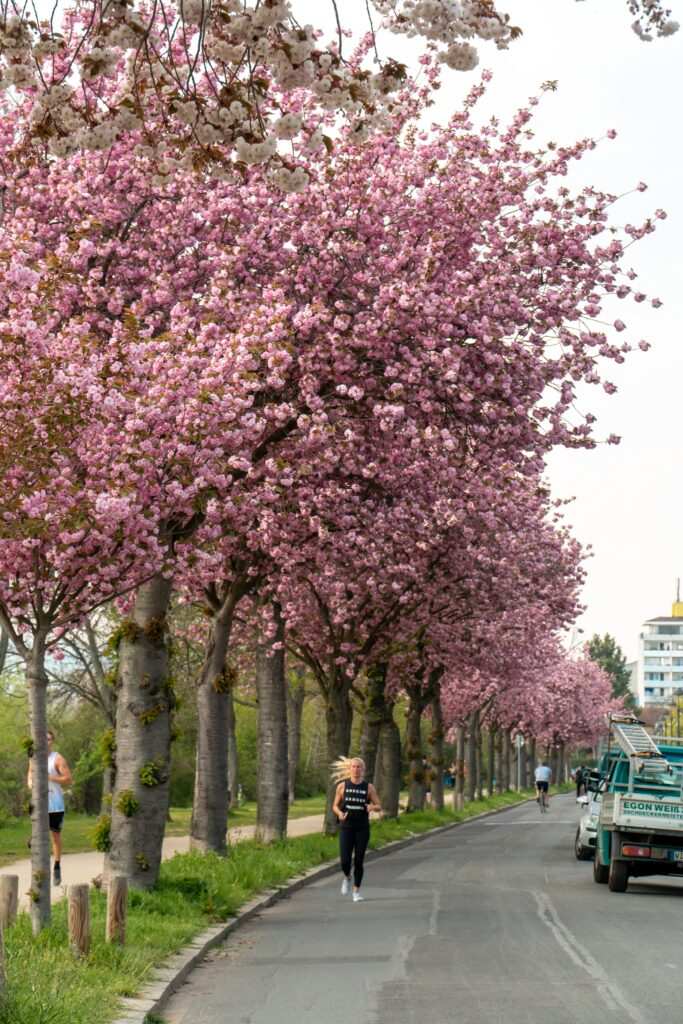 What-is-benefits-of-jogging-variation in a beautiful road